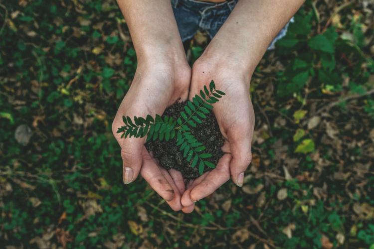 芽を優しく持つ手